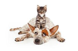Alle Hunde und Katzen Willkommen!