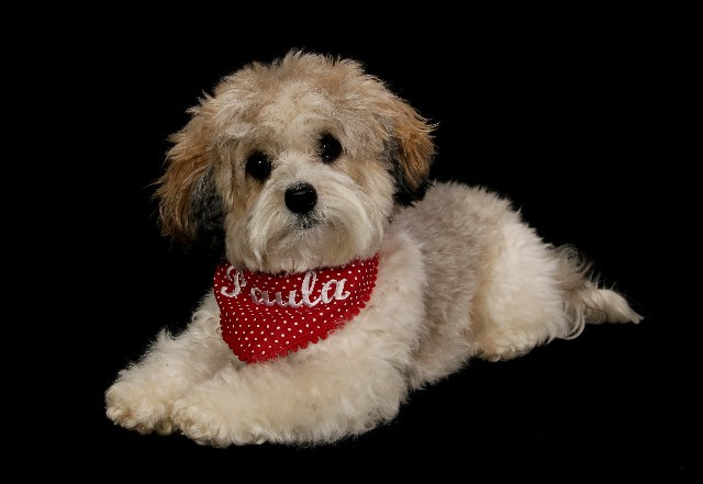 Hundesalon Picobello Rehburg Tel Referenzen
