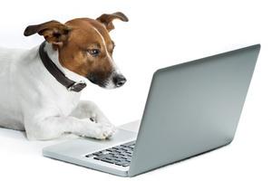 Hund guckt auf PC nach Neuigkeiten im Hundesalon Picobello